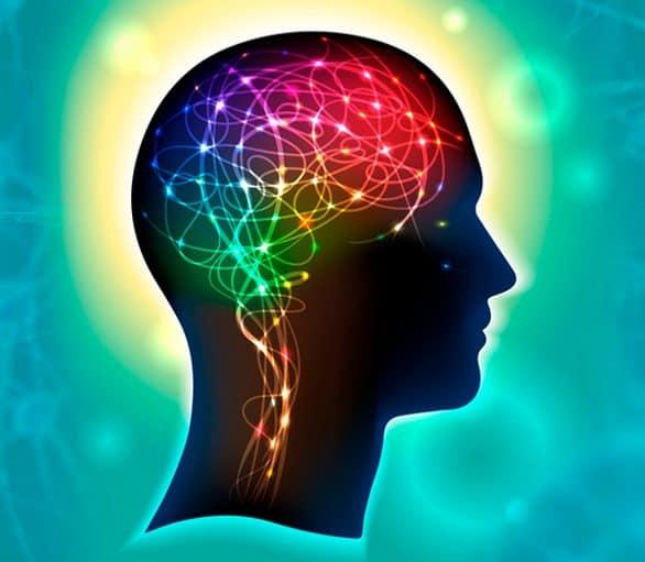 Brain -Synapse XT supplement