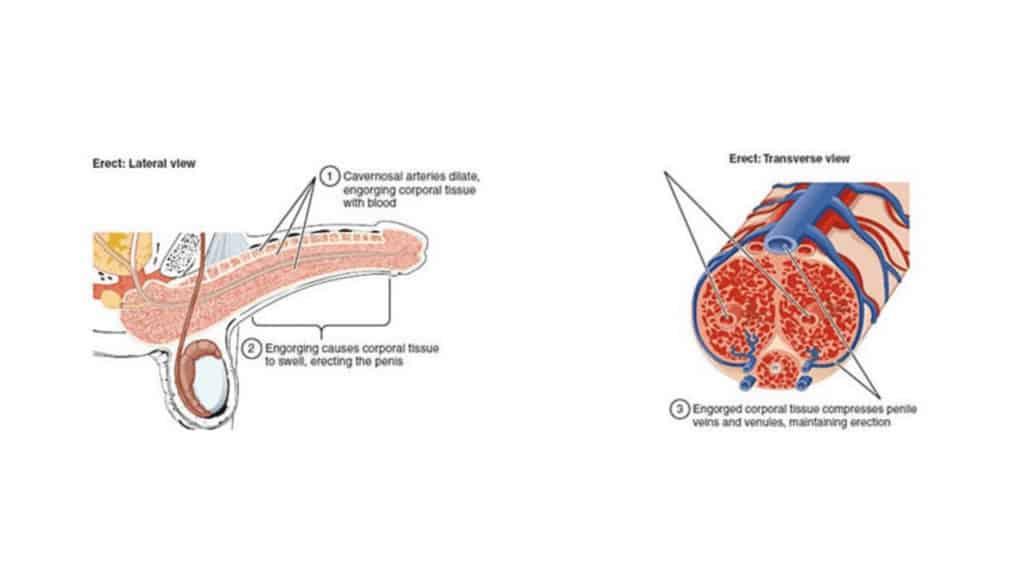 Flow Zone Male Enhancement - Maintaning erection