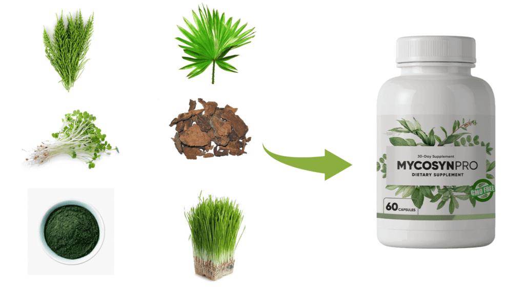 Mycosyn Pro Ingredients