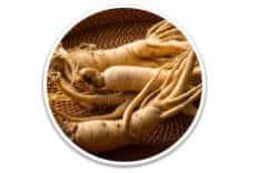 Exipure Ingredient - White Korean Ginseng